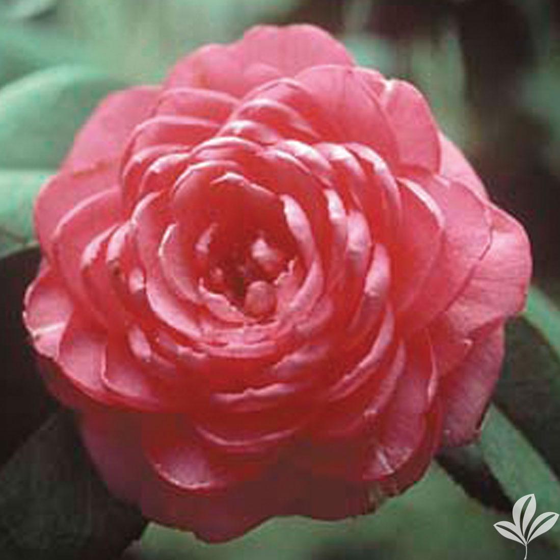 April Rose